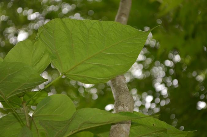 Green Leaf, by Diana Busby