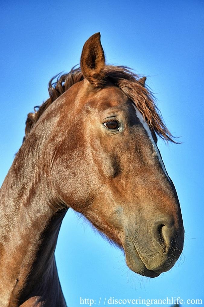 b2Fotor0523112457 horse's left eye