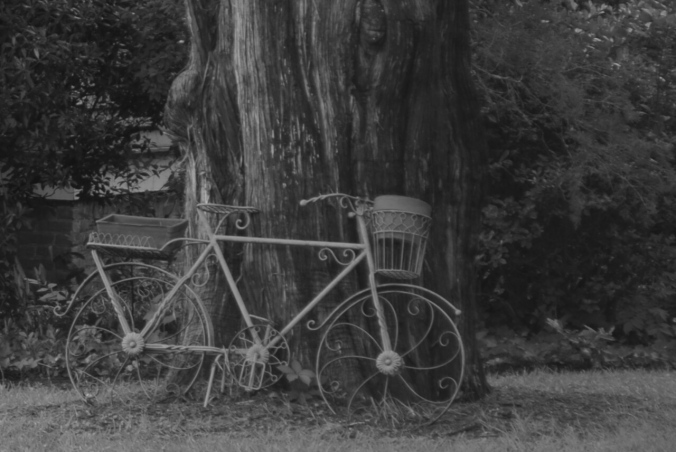 Photo of antique bicycle, by Diana Busby