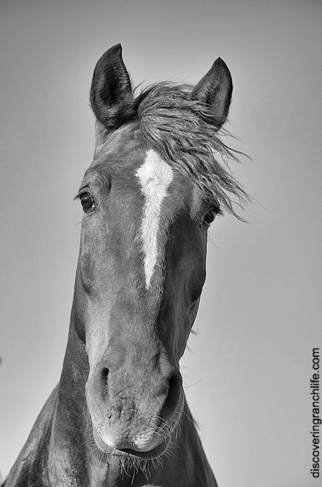 Fotor0709115955 horse facing forward