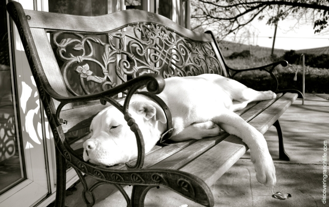 wbw dog sleeping on bench
